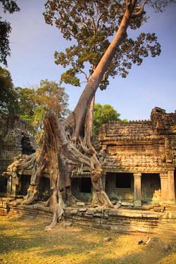 CM033RF Cambodia, Temples of Angkor (UNESCO site), Preah Khan Temple