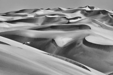 AF31JAM0046 Sandwich Harbor, Namibia. Gull flies over immense sand dunes.