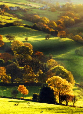 England, Calderdale. Rolling hills in autumn sunshine.