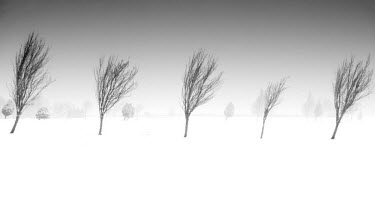 ENG13041AW England, Calderdale. A winter scene of trees in freezing fog.