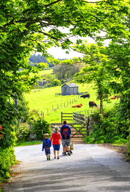 ENG13093AW England, Isles of Scilly, Tresco. A young family walking down a country lane to see grazing animals.