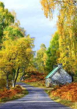 SCO33873AW Scotland, Glen Strathfarrar. The road and a small bothy surrounded by autumn trees.