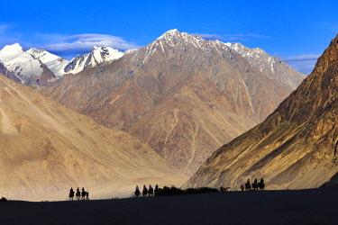 IND8038 Visitors riding camels in Nubra Valley, Ladakh