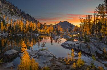 US48GLU0699 USA, Washington State. Subalpine larch (Larix lyallii) surround Horseshoe Lake, Alpine Lakes Wilderness at sunrise.