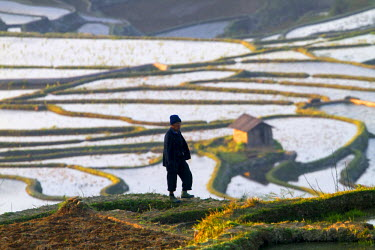 HMS1717869 China, Yunnan province, Yuanyang, Cultural Landscape of Honghe Hani Rice Terraces, listed as World Heritage by UNESCO, Azheke village, rice terraces, peasant, farmer