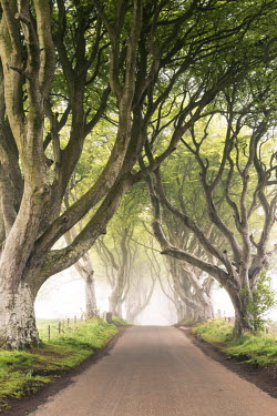 IRL0415AW The Dark Hedges (Bregagh Road), Ballymoney, County Antrim, Ulster region, northern Ireland, United Kingdom. Iconic trees tunnel.
