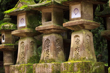 AS15PDY0139 Kasuga-Taisha Shrine in Nara, Japan is famous for its large number of ancient stone lanterns which line the entrance path.