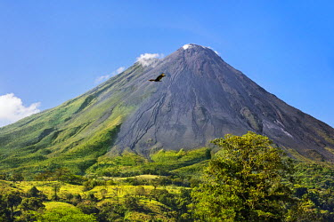 CR33210 Costa Rica, Alajuela Province, Arenal.  Arenal Volcano with steam rising from its peak.  This active stratovolcano erupted last in 2010. A Turkey Vulture flies overhead.