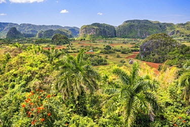 CUB1482 Cuba, Pinar Del Rio Province, Vinales, Parc Nacional Vinales.  The attractive landscape of the Vinales Valley is studded with distinctive limestone hills, known as mogotes. The place is a UNESCO World...