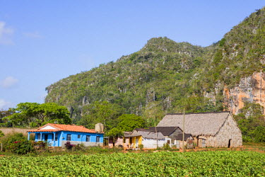 CUB1486 Cuba, Pinar Del Rio Province, Vinales, Parc Nacional Vinales.  A tobacco farmer�s homestead in the attractive landscape of the Vinales Valley which is studded with distinctive limestone hills, known a...