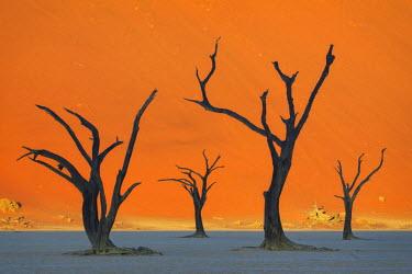 NB01124 Namibia, Namib Naukluft National Park, Sossussvlei, Deadvlei clay pan