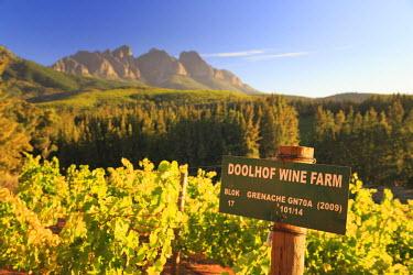 SA01127 South Africa, Western Cape, Paarl, Doolhof Wine Estate