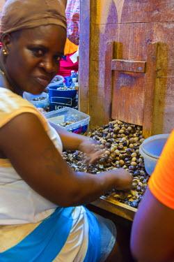 GN01072 Caribbean, Grenada, Gouyave, Gouyave Nutmeg Station, sorting nutmeg