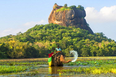 SL01080 Elephant ride with Lion Rock, Ancient Rock Fortress behind, Sigiriya, Sri Lanka