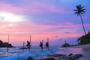 SL01107 Stilt fishermen, sunset, Weligama, South coast, Sri Lanka