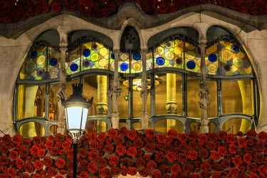 SPA7048AW Close-up view of the large window on the facade of Casa Batllo beautifully adorned with roses to support a local charity organization helping some 1,000 homeless in town, Barcelona, Catalonia, Spain