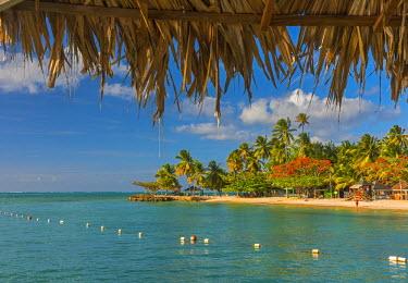 TT01043 Caribbean, Trinidad and Tobago, Tobago, Pigeon Point