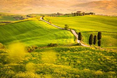 ITA8934AWRF Pienza, Val d'Orcia, Tuscany, Italy