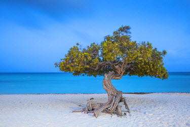 AA011RF Caribbean, Netherland Antilles, Aruba, Divi Divi Tree on Eagle Beach