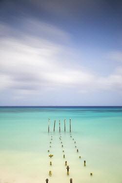 AA01060 Caribbean, Netherland Antilles, Aruba, Divi beach, Pelicans on wooden posts