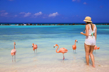 AA01095 Caribbean, Netherland Antilles, Aruba, Renaissance Island, Flamingo beach, Tourist with flamingoes