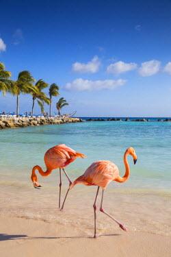 AA01100 Caribbean, Netherland Antilles, Aruba, Renaissance Island, Flamingo beach