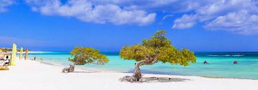 AA01112 Caribbean, Netherland Antilles, Aruba, Divi Divi Trees on Eagle Beach