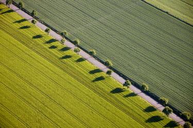 IBLBLO01952422 Aerial view of fields, road, trees in a line, Ense, Sauerland region, North Rhine-Westphalia, Germany