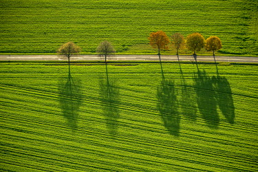 IBLBLO03800639 Aerial view of fields and trees with shadows, North Rhine-Westphalia, Germany