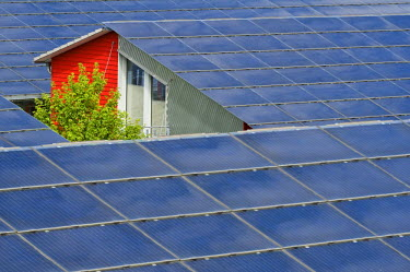 IBLDJS01170833 Solar roofs of the Solarsiedlung solar settlement, Vauban, Freiburg, Baden-Wuerttemberg, Germany