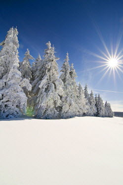 IBLDJS01187795 Winter landscape, Black Forest, Baden-Wuerttemberg, Germany