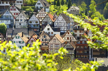 IBLDJS02250238 Half-timbered houses in Schiltach, Kinzigtal Valley, Black Forest, Baden-Wuerttemberg, Germany