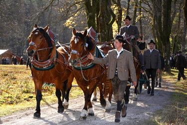 IBLMAN01026611 Coach during Leonhardifahrt, the feast day of Saint Leonard of Noblac, Kreuth, Tegernsee Valley, Upper Bavaria, Germany