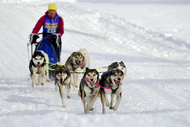 IBLSEI00637060 Dog sled race, Unterjoch, Bavaria, Germany