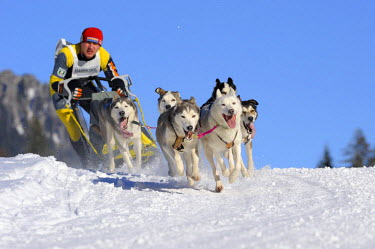 IBLSEI01423241 Dog-sled team, Unterjoch, Bavaria, Germany