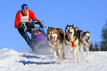 IBLSEI01423246 Dog-sled team, Unterjoch, Bavaria, Germany