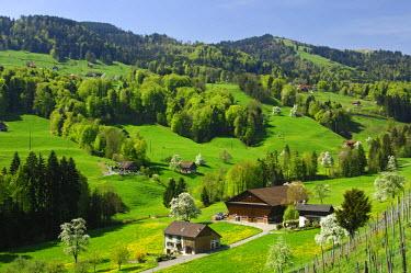 IBLGUF00263737 Spring in the cantone of Schwyz, Switzerland