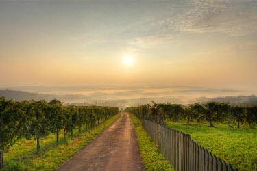 IBLMAN01319755 Morning mist, vineyard in Langegg near St. Stefan ob Stainz, Schilcher wine route, Styria, Austria