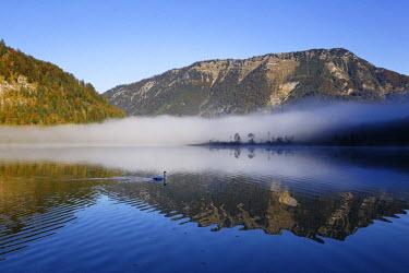 IBLMAN02410893 Early morning on lake Offensee, Ebensee, Salzkammergut region, Upper Austria, Austria