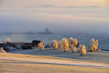 IBLSHU03806915 Wintry landscape in hoarfrost with farm and fruit trees, Beinwil, Canton of Aargau, Switzerland