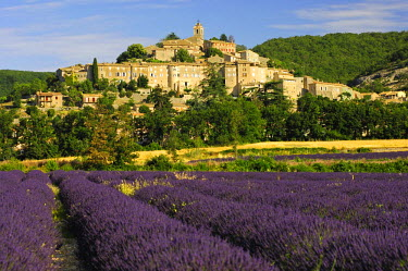 IBLGVA00762492 Lavender field in front of Banon, Provence, France