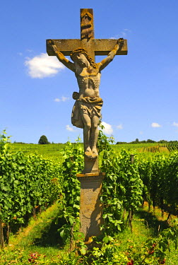 IBLGVA01721637 Stone crucifix in the vineyards of Orschwihr, Alsace, France