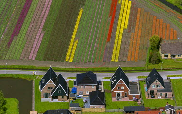 IBLBLO03731973 Town and tulip fields, Aerial view of Zuidermeer, Wester-Koggenland, province of North Holland, The Netherlands