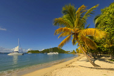 IBLSEI03111844 Caribbean Bay with palm trees and boats, Grenadines, Karibik, Saint Lucia