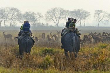 IBLOMK01875683 Early morning elephant safari, Kaziranga National Park, Assam, India