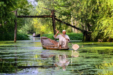 IBLFBD03714734 A man paddeling in a shikara boat on a canal near Dal Lake, Srinagar, Jammu and Kashmir, India