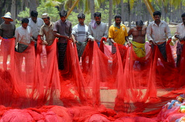 IBLOMK01909585 Fishermen with red net in Kasargod, Kerala, South India, India