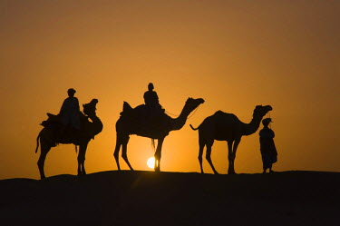 IBLGAB01055443 Camels at sunset in the Thar desert, Rajasthan, India, South Asia
