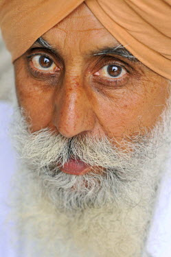 Sikh, portrait, Harmandir Sahib or Golden Temple, Amritsar, Punjab, North India, India, Asie