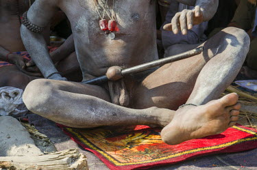 IBLFBD03152395 Shiva sadhu, holy man, rolling his penis on a iron pole for spiritual reasons, at the Sangam, the confluence of the rivers Ganges, Yamuna and Saraswati, during Kumbha Mela festival, Allahabad, Uttar P...